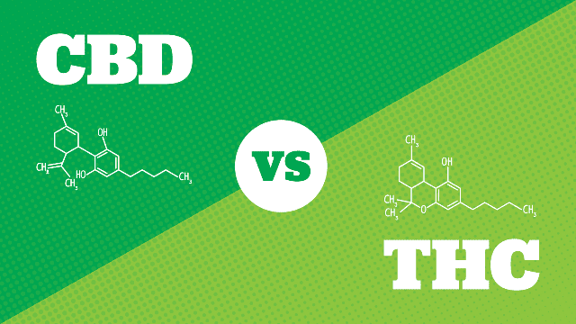 CBD vs THC : quelles sont les différences entre ces deux substances ?