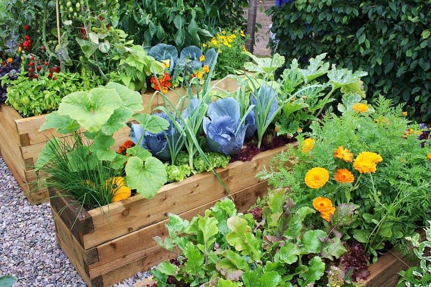 Un jardin fonctionnel